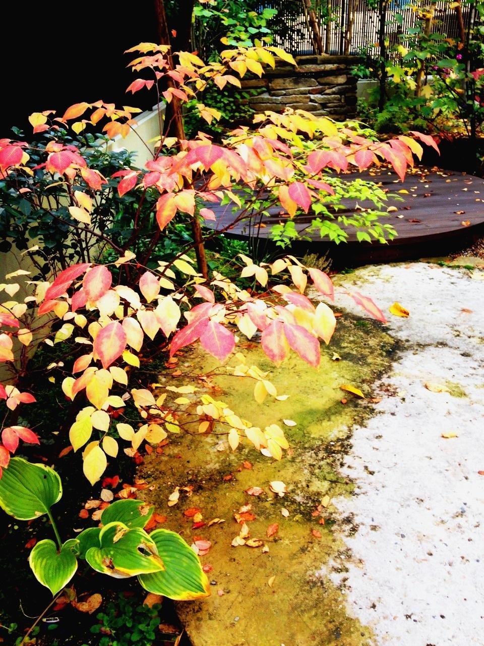 151110_秋の庭アップ.jpeg