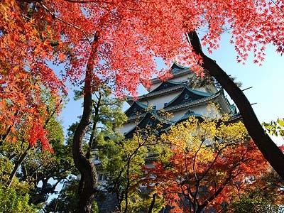 秋の名古屋城(拾い物写真).jpg